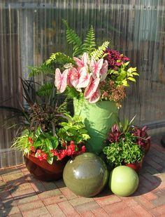 Great pot combination for shade-caladiums, ferns, coleus, begonias, cordylines, asparagus fern and duranta.