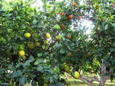 Μπόλιασμα ξυνόδεντρου Garden Works, Garden Guide, Bud, Plant Propagation, Healthy Recipes, Fruit, Nature, Flowers, Plants