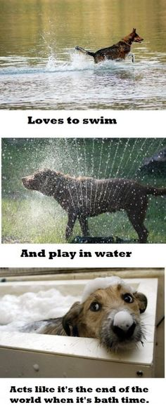 21 More Photos That Only Dog Owners Will Understand | Mommy Has A Potty MouthMommy Has A Potty Mouth