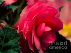 See more of my photographic art at: http://ron-roberts.artistwebsites.com/ If you like my photographs please share. Thank you