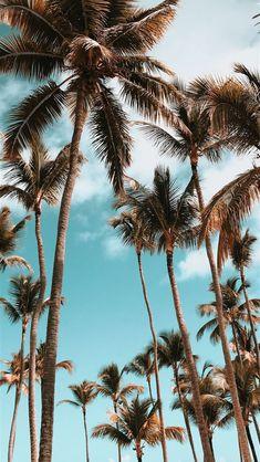 Iphone Wallpaper Landscape, Ocean Wallpaper, Summer Wallpaper, Tree Wallpaper, Iphone Background Wallpaper, Scenery Wallpaper, Nature Wallpaper, Aesthetic Pastel Wallpaper, Aesthetic Backgrounds