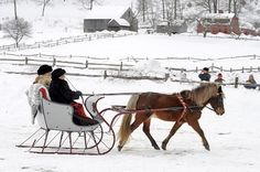 Picture of an Albany Cutter sleigh pulled by a Welsh breed horse. This picture was taken at the Old Sturbridge Village Antique Sleigh Rally.