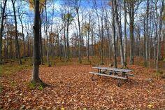 Murphys Point Provincial Park, Ontario, Canada Ontario Parks, Outdoor Furniture, Outdoor Decor, Canada, Home Decor, Decoration Home, Room Decor, Home Interior Design, Backyard Furniture