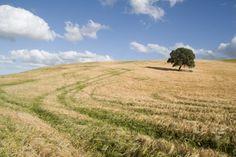 campos de trigo by Salvador Martin Yeste on 500px