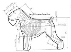 640 x 474 ( Dog Grooming Styles, Poodle Grooming, Pet Grooming, Schnauzer Gigante, Dog Anatomy, Black Russian Terrier, Purebred Dogs, Dog Show, Working Dogs