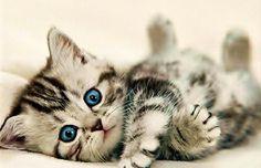 Precocious little cutie! DancingPetNaturalProducts.com