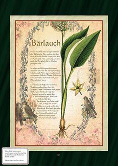 Bärlauch - Schutz vor Hexen, bösen Geistern, Vampiren und Schlangen.