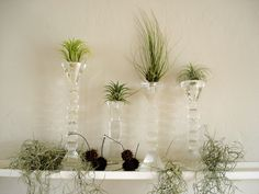 air plants. Love it. Candle holders are the perfect display!