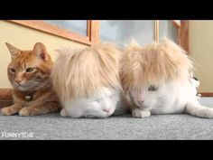 Two Cats in Super Blonde Spiked Wigs