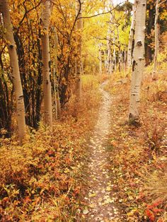 A magical hike in Golden Gate Canyon State Park (Colorado) [photographer unknown] to make up for the end of summer - the magnificent fall! Beautiful World, Beautiful Places, Beautiful Pictures, Ville New York, Walk In The Woods, All Nature, Jolie Photo, Pathways, The Great Outdoors