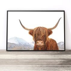 Highland Cow Art Print | Home Decor Cow Photography | Poster | Scottish Highland Cattle | Highland Cow Photography | Scottish Cow. Wall Art by Little Ink Empire