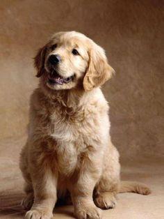 Precious Pup!