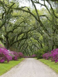 Afton Villa in St. Francisville, Louisiana.  Just a short drive from my house and just gorgeous in spring when the azaleas are all in bloom.