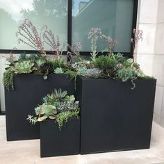 Modern black boxes planted up with succulents! Container Plants, Container Gardening, Balcony Garden, Terrace, Rectangular Planters, Backyard Projects, Hanging Baskets, Potted Plants, Deco