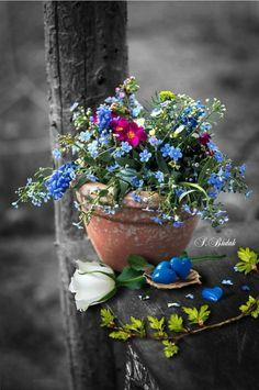 Splash of color Amazing Flowers, Love Flowers, Beautiful Roses, Beautiful Images, Splash Photography, Cute Photography, One Color, Color Pop, Photo Splash