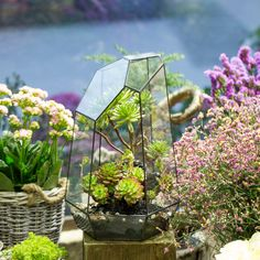 Custom Made Super Large 16.1 inches Height Irregular Prism Glass Geometric Terrarium Box Tabletop Succulent Plant Planter Flower Pot Fern Moss XLarge