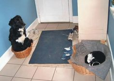 """""""No, by all means, you take my bed. I'm good with this basket."""""""