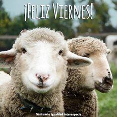 Benjamín les desea un #FelizViernes a todas las personas que se preocupan por los demás animales y les recuerda que sacando la carne huevos y leche de nuestro menú contribuímos a hacer realidad la construcción de un futuro más justo y compasivo con todos los animales