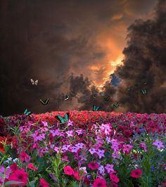 •♥• 3269 by peter holme iii on 500px