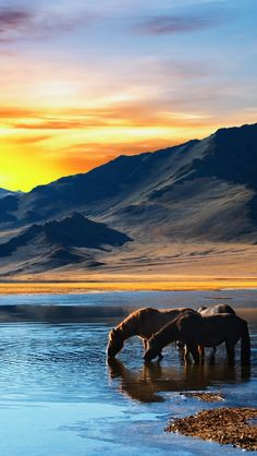 I would love this picture of the horses at sunset on my wall!