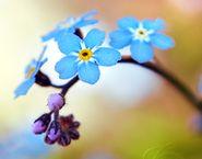 Blue Flowers  { Blueberry Bliss } { Blueberry Bliss } ColorFresh board  http://www.familyfreshcooking.com/2012/04/20/colorfresh-palette-2-blueberry-bliss/