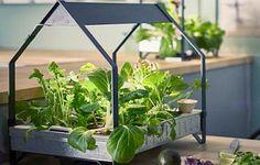 Arriva il Giardino Idroponico IKEA che permette di coltivare le verdure in casa