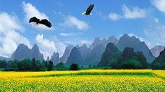 Field Flowers Eagles Sky Birds Trees Mountains Dandelion Fields Wallpaper