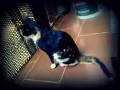 Atira Cats