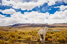 the beauty of #Peru by Fresco Globe and viralblender.com