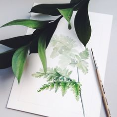 Fern #illustration #draw #fern #botany #botanicalwatercolor #watercolor #herbs