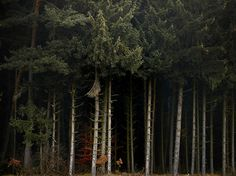 Wald #27 by Joerg Marx, via Flickr