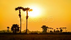 time lapse sunset on countryside field of thailand - Stock Footage | by Punya Family (โอเล่..เน้อ)