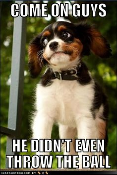 funny dog pictures - Suspicious Goggie