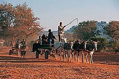 Botswana is a country with many fascinating cultures, due to the ethnic diversity of the country. Collecting water using the donkey cart is a weekly chore, and is often the responsibility of the children in rural families.