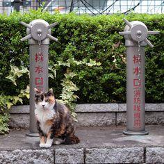 火の用心「お寒い季節、気をつけましょう」#ねこ #猫 #cat #gato #chat #外猫 #straycat #ねこ部 #ふわもこ部 #猫好きさんと繋がりたい #cutecats #followme  #Regram via @kiyochan_cats Japanese Cat, Neko, Cute Cats, Beautiful Cats