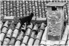 Gatto sul tetto... Cat on the roof...