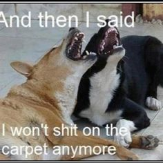 #lol  #dog  #dogs  #dogmeme  #memes  #memestagram  www.anilols.co.uk for more funny animals #cats