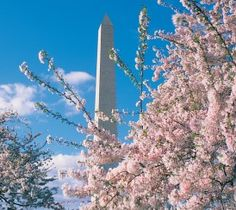 Springtime Events in DC | washington.org Visit the White House website in early March for Easter Egg lottery.