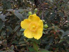 nice yellow flower