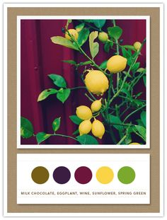 Hmmm... I've already committed to yellow and I've got some walnut bedroom furniture. Could I make this Wine color work?!