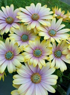 Beautiful flowers..