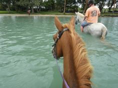 Club Hippique Adventure Park (Port Vila, Vanuatu): Top Tips Before You Go - TripAdvisor