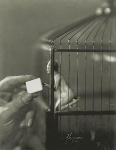 Olga Spolarics [Austrian, b. Hungary, 1895–1969] and Adorján Wlassics [Austrian, b. Hungary, 1893-1947]) My Little Bird (Mein Vögerl), 1926 Gelatin-silver print,