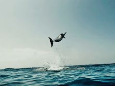 Dolphin Images, Kona Coast, Local Legends, Foggy Morning, Out To Sea, Homescreen Wallpaper, Great White Shark, Beautiful Mind, Fish Tank