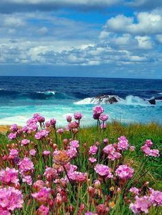 Flower samsung galaxy s5 wallpapers 118 nature pinterest s5 more information mightylinksfo