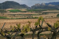 La Rioja Tierra Abierta Haro 2013 by jimmypons, via Flickr