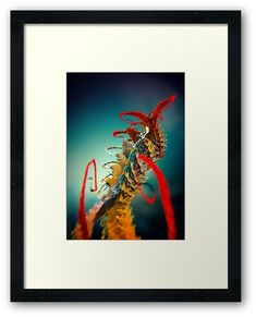 'Microplants Metasefolia Two' Framed Print by Fractal Art, Fractals, Protective Packaging, Centerpiece Decorations, Custom Boxes, Print Poster, Framed Art Prints, Image