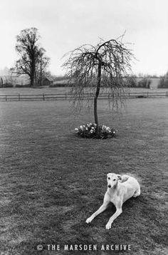 Greyhound, Dorset, England (MA-L-001)