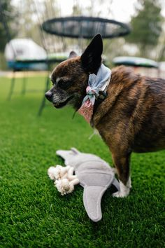 Our pup has a new friend! Play nice! Shop dog toys and fashion on Amazon now. Every purchase helps fund the rescue and adoption programs of MuttNation Foundation.