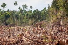 Demand for Expensive Furniture Is Fueling Illegal Logging in Indonesia: Loopholes in a ban on forest clearing have led to the destruction of critical habitat for orangutans and other wildlife. Rainforest Pictures, Jungle Pictures, Nature Pictures, Beautiful Pictures, Especie Animal, Leh, New Forest, Wildlife Conservation, Environmental Issues